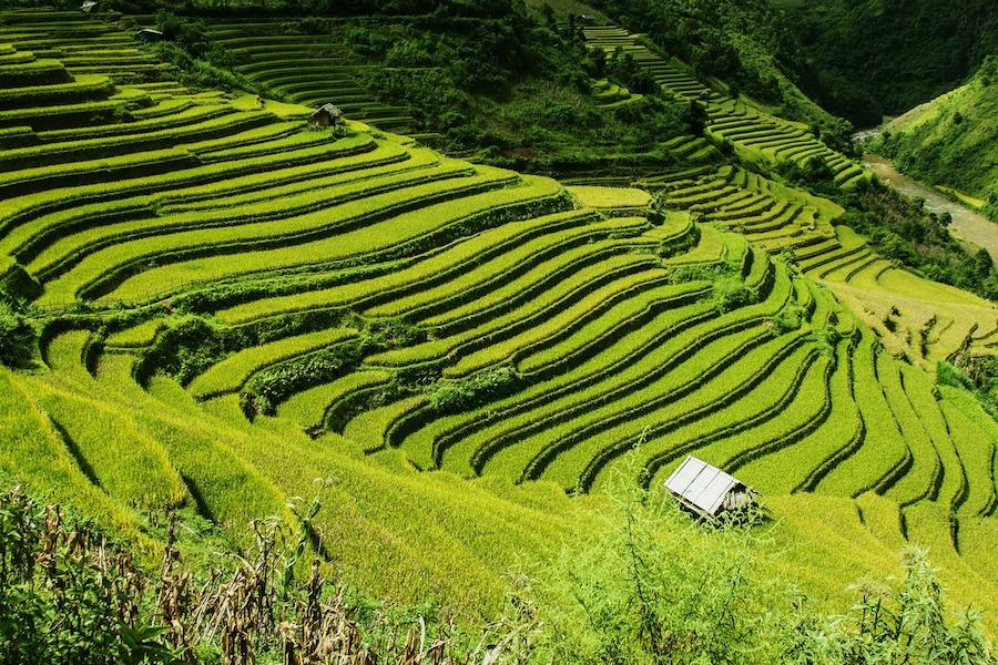 rice-terraces-276017_1280 Gastfamilien in Vietman bieten nachhaltigen Tourismus Lifestyle Reisen