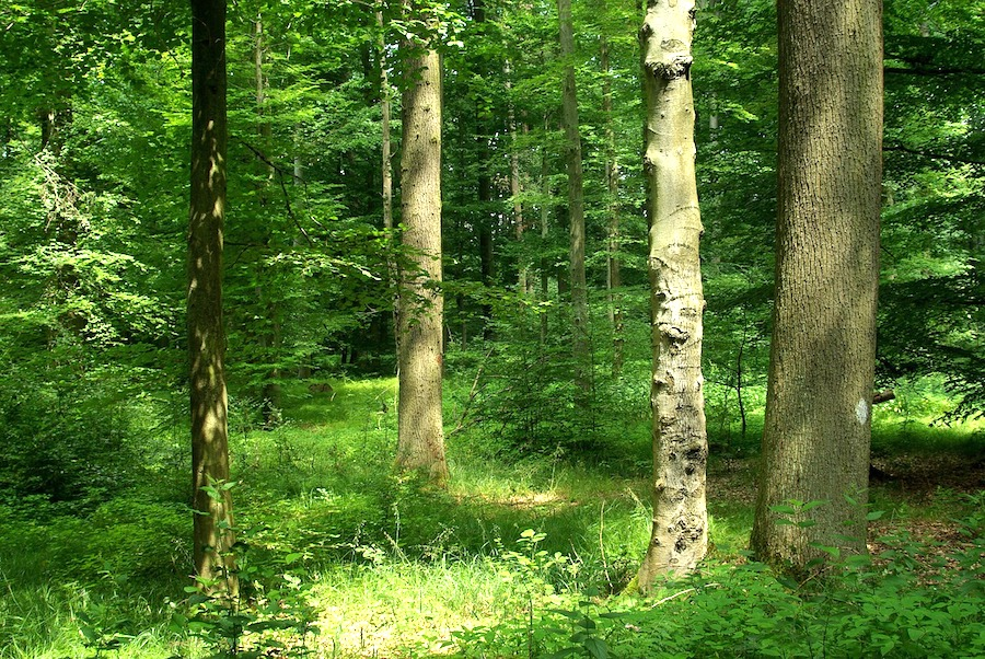 forest-1185184_1280 FAIReconomicsNewsletter KW 41 NACHRICHTEN: Extinction Rebellion, abgeschwächtes Klimaziel, neue CDU Klimapolitik, Luxusprodukt Kaffee, Finanzspekulation mit Klimawandel, Neues aus dem Bundestag Newsletter