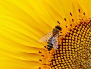 sun-flower-1643794_640-300x227 FAIReconomicsNewsletter KW 08/19NACHRICHTEN: EU-Kommission dementiert, Falsche Zahlen, Gebäudekommission stirbt, keine CO2 Bepreisung, Insektensterben, weg vom Schweröl Newsletter