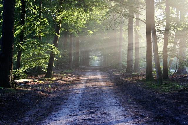 the-road-815297_640 FAIReconomicsNewsletter KW 38NACHRICHTEN: Diskussionsbedarf vor Klimakabinett, Brasilien wehrt sich, Greta vor dem Weißen Haus, Landgrabbing im Osten, Neues aus dem Bundestag Newsletter