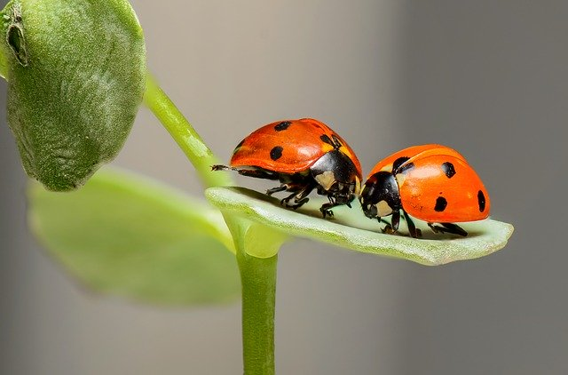 ladybugs-1593406_640-1 FAIReconomics Newsletter Week 06/20 Newsletter